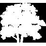 Oak Tree Symbol Icon
